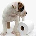 як привчити цуценя до туалету