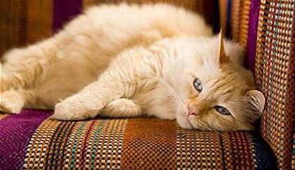вивести запах котячої сечі